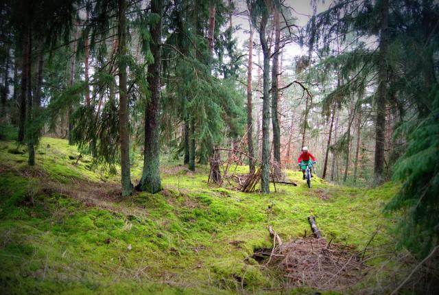 Wälder sind das Opium für Trail-Fans in Mittelgebirgen!